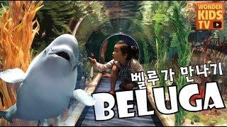 아쿠아리움 벨루가 돌고래 beluga mating [롯데월드 아쿠아리움 수족관] beluga whale l aquarium