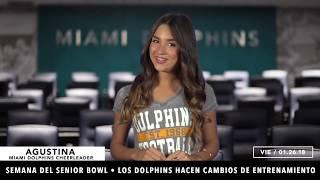 Dolphins Internacional: Episode 70