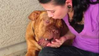Kimbo Available For Adoption Through Big Bully Rescue