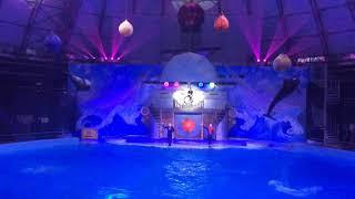 Дельфиния. Лазерное Шоу В Новосибирске. Дельфинарий