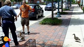 Duck Mom Quacks To Alert Rescuers About Her Trapped Babies | The Dodo thumbnail