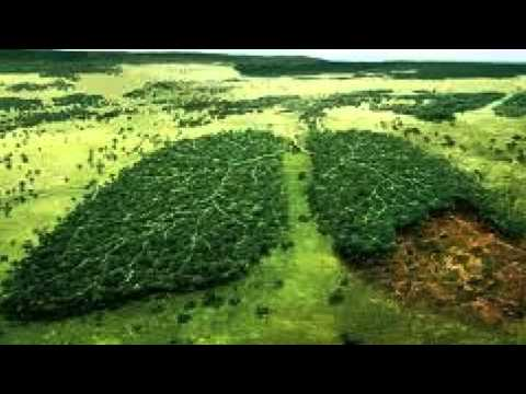 Emily T Indonesia Deforestation