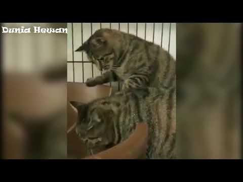 Kucing Ternyata Merasa Mual Dengan Suara Sisir Digaruk