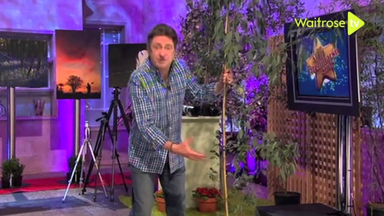how to prune eucalyptus trees waitrose garden youtube. Black Bedroom Furniture Sets. Home Design Ideas