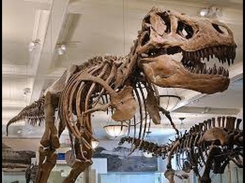 Natural History Museum London-Video Tour