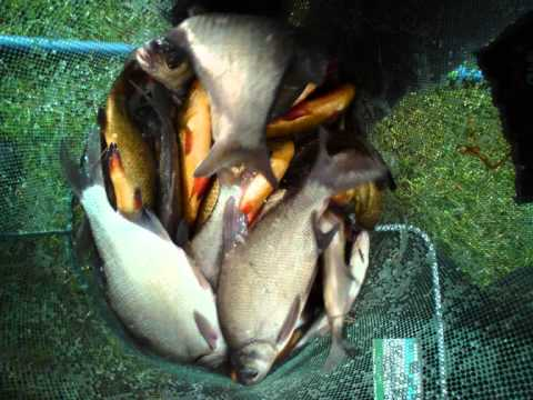 The Fish What Troy Ward Have Caught This Year