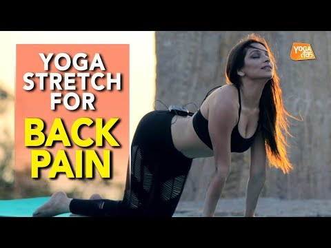 Yoga Stretch For Back Pain | Cat-Cow Pose | Yoga Tak