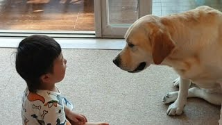 A dog go giving comfort to a crying baby
