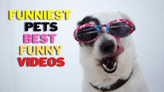 Funniest Pets 🐕🦺🐩    Best Funny Animal Videos    FunMaza