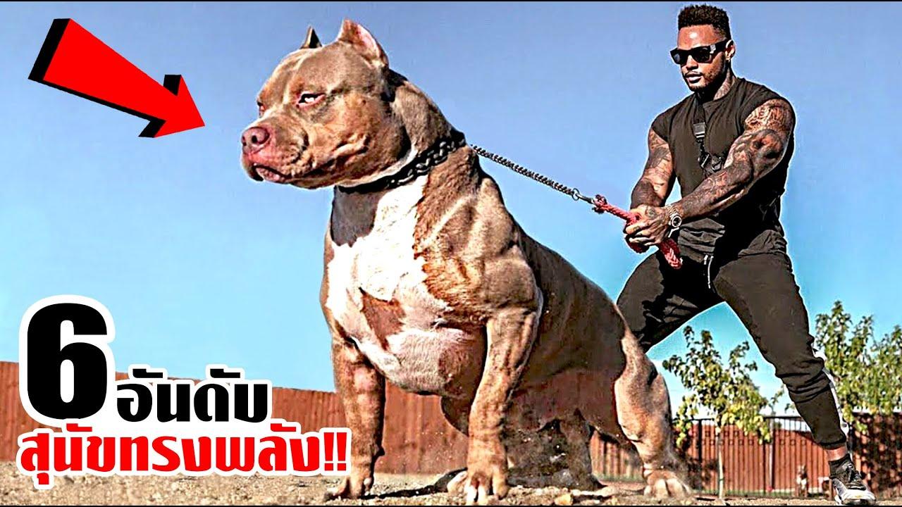 6 สุนัขที่ทรงพลังและแสนอันตราย!! (ขนาดโซ่ยังเอาไม่อยู่)