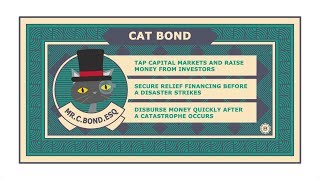 Name's Cat Bond