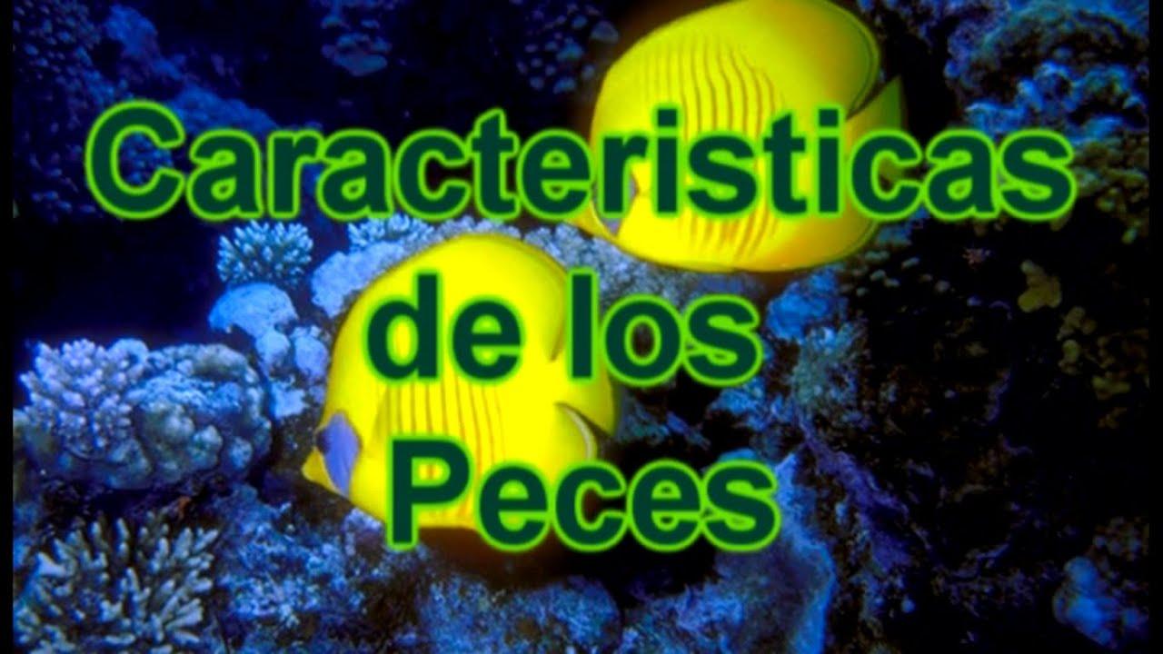 Los peces caracter sticas de los peces documental de for Fabricacion de estanques para peces