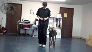 K9 Etiquette School - Utility, Assistance, And Some Fun!