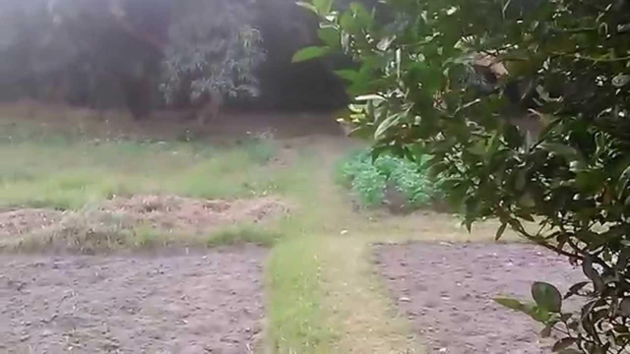 Our Kitchen Garden Tour Of Our Kitchen Garden At Santiniketanmp4 Youtube