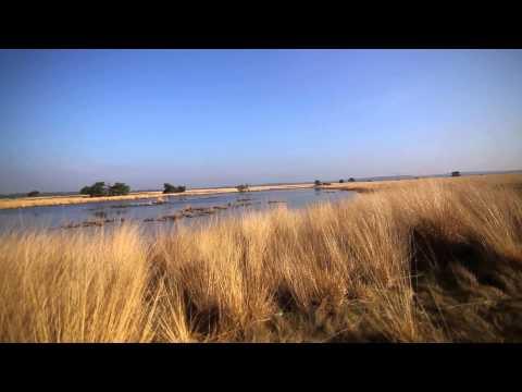 De Hoge Veluwe Park // Netherlands // HD