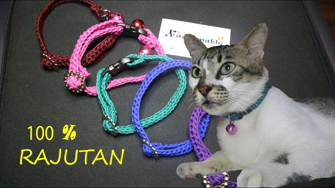 Download 97+  Gambar Kalung Kucing Anggora Paling Baru Gratis