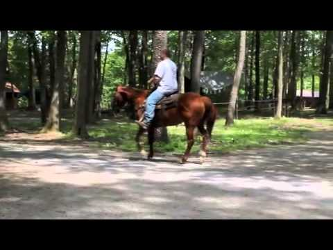 Kris Smith Quality Horses Montana  12 Year Old Ranch Gelding
