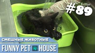 СМЕШНЫЕ ЖИВОТНЫЕ И ПИТОМЦЫ #89 АВГУСТ 2019 | Funny Pet House