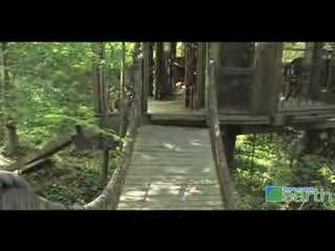Tree House Living For Adults Youtube