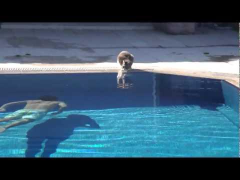 Faire peur un chat au bord d 39 une piscine youtube for Chambre qui fait peur