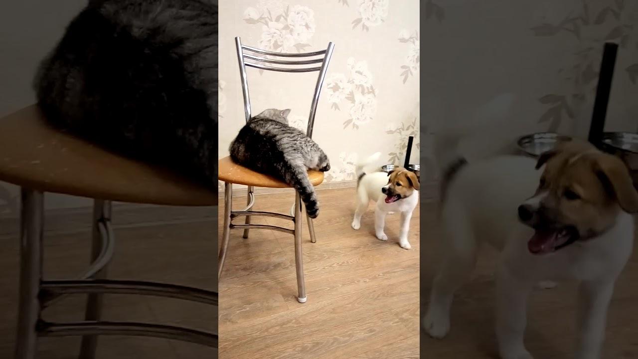 Моя собака Грейс и кот Василий! - YouTube