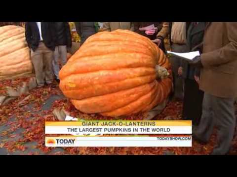 The GPC Growers: Today Show:  Hard work to grow worlds largest pumpkin
