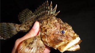 Морской ёрш рыбалка на море ёрш скорпена rockfishing Scorpaena Анапа fishing