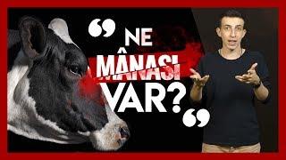 Ne Manası Var İnek Kesmenin? ( Kurban Bayramı ) - Osman Bulut