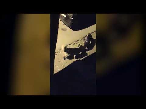 Krimi.lv | Suņi Iļģuciemā