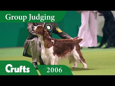 Welsh Springer Spaniel wins Gundog Group Judging at Crufts 2006