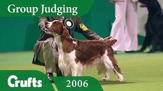 Welsh Springer Spaniel wins Gundog Group Judging at Crufts 2006