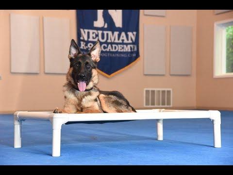 Sam (German Shepherd) Puppy Camp Dog Training Video Demonstration - 동영상
