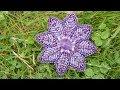 Поделки - Мастер класс брошь заколка Цветок клематиса своими руками часть 2.  Установка булавки, обшивка края.