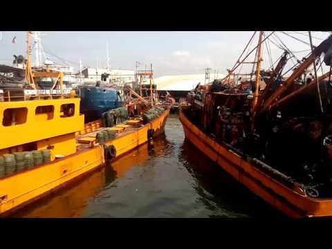 Navotas fish port maria fe fishing corp.