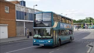 Badger_ Bus
