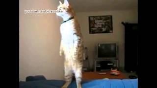 Смешная подборка видео про животных - funny animals videos (HD)