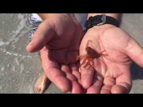 Real Life Baby Kraken