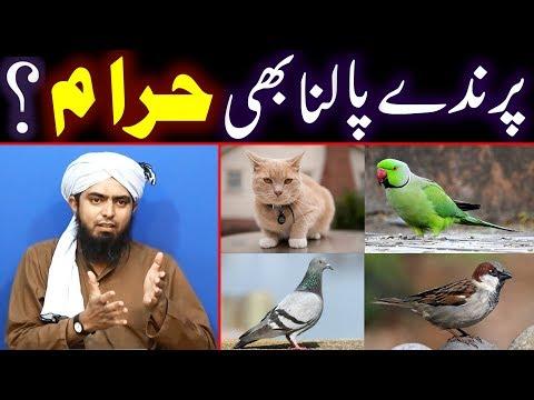 Parinde aur Paltu JANWAR Palna   Birds & Pets   Billi Palna   Engineer Muhammad Ali Mirza