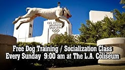Dog Man offers FREE Dog Training and Socialization every Sunday in Los Angeles