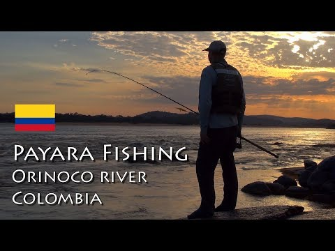 PAYARA FISHING - Orinoco River - Colombia