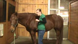 Horse Health and Disease- Physical Exam