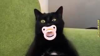 приколы с кошками для поднятия настроения!