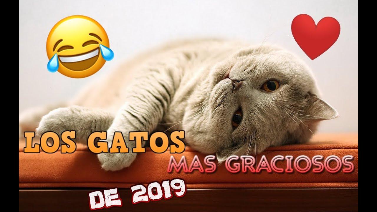 Los gatos mas graciosos de 2019
