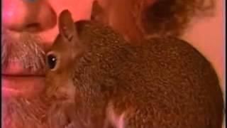 Bob ross pocket squirrel pea-pod
