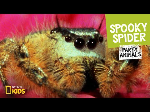 Spooky Spider feat. Parry Gripp (Music Video) 🕷   Party Animals