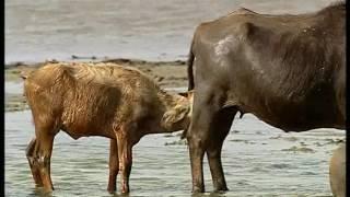Documentaire Animalier Chroniques de l'Asie Sauvage DVD 3/3