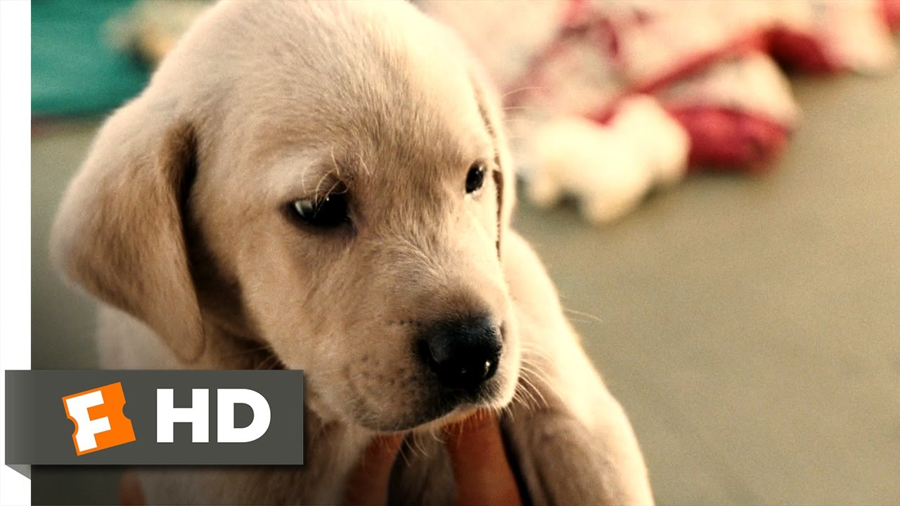 Marley Me 15 Movie Clip Clearance Puppy 2008 Hd Youtube