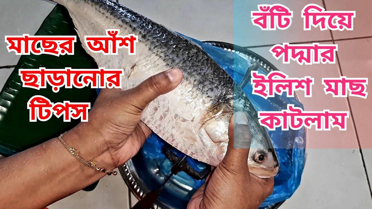 বিদেশে পদ্মার ইলিশ||Cutting Fish Using By Boti |বঁটি দিয়ে পদ্মার ইলিশ মাছ কাটলাম।