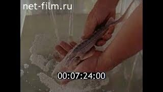 Рыбы Каракумской пустыни: лжелопатонос, белый амур, толстолоб