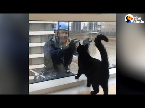 Cat Loves Window Washer | The Dodo